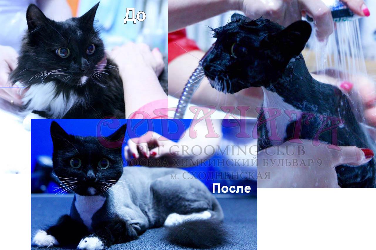 Кошка1 копия