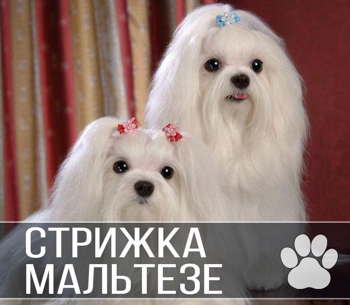 чистка на дому салона автомобиля Дмитров цена